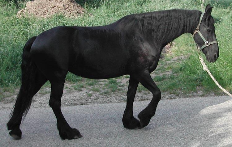 rückenprobleme pferd lahmheit
